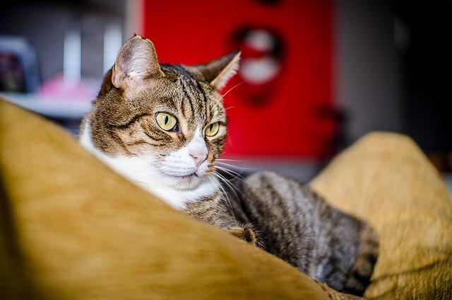 Nuova linea di arredamento dedicata a cani e gatti for Arredamento per gatti