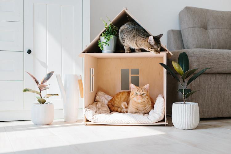Come preparare la casa per tenere un gatto